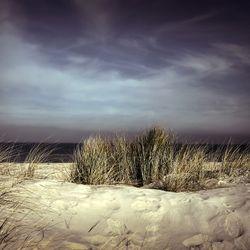https://bylge-images.s3.amazonaws.com/dunes-4473196_1280.jpg