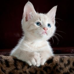 https://bylge-images.s3.amazonaws.com/kitty-551554_1920.jpg